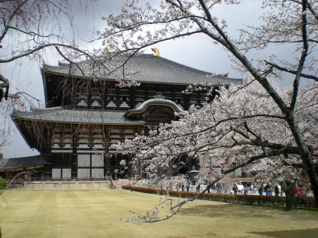 Kirschblüte in Nara