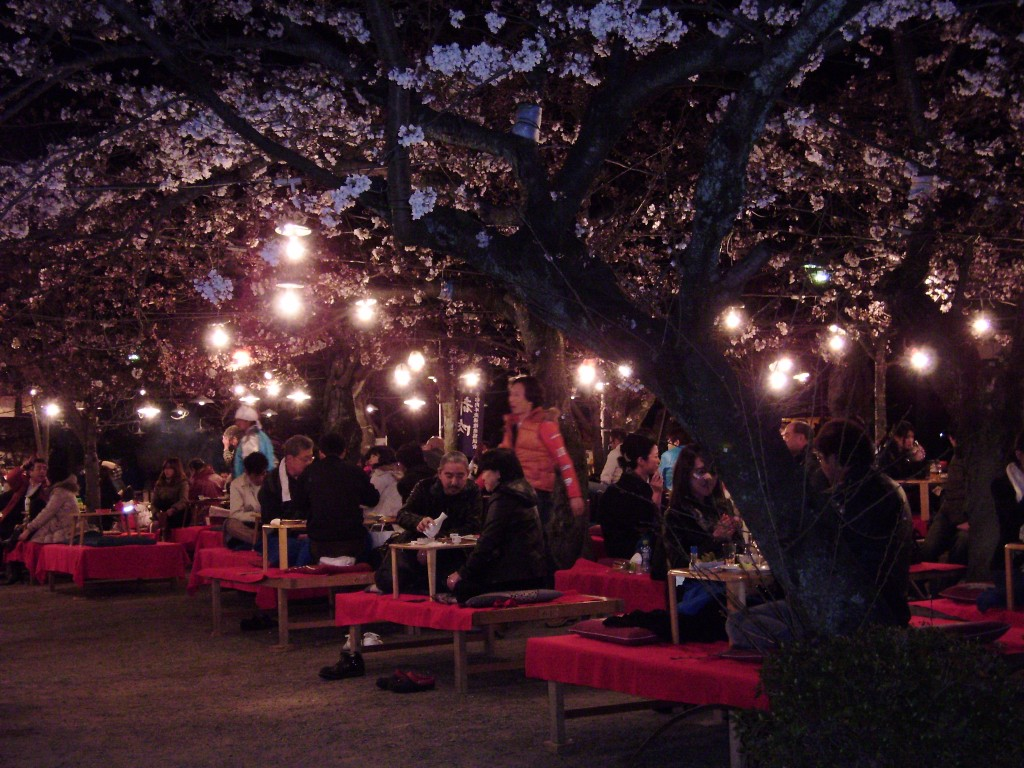 Kirschblütenschau