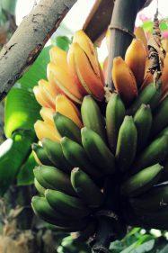 The Banana Farm - Von gelben Früchten und wilden Tieren...