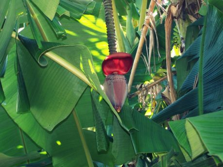 Der Fruit and Spice Park in Florida City. Von Jackfruits und Naschkatzen