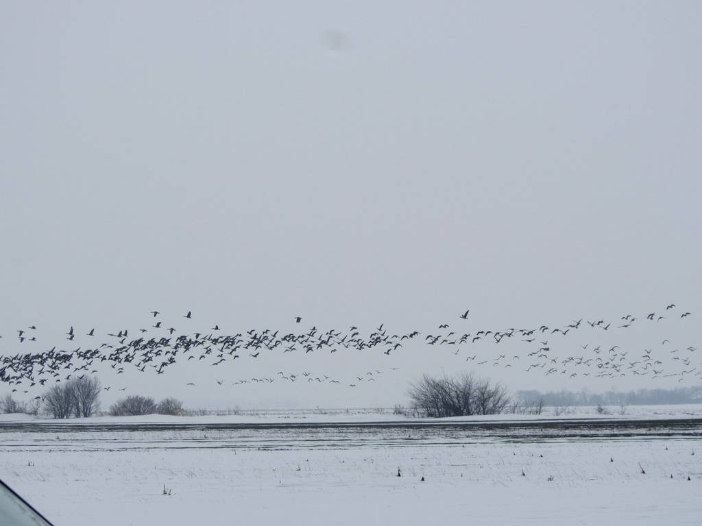 Wintersafari Österreich Burgenland