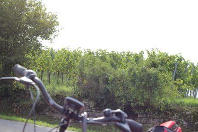 Radtour durchs Kraichgau: Ein Wochenende auf den Spuren von Schlössern und Burgen.