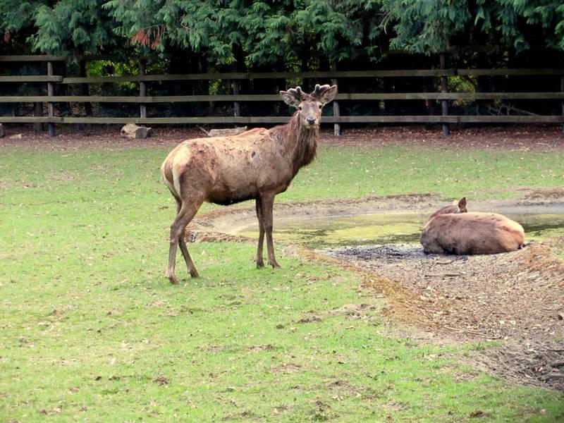 Tierpark Tannenbusch