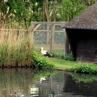Ein Nachmittag im Wildtierpark Tannenbusch - vom Happy Wildschwein und springenden Hirschen