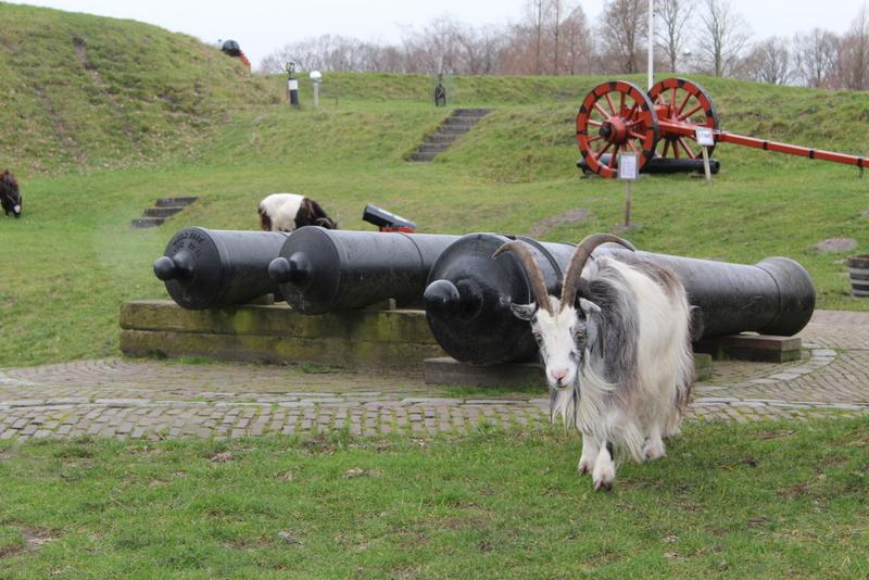 Ziege im Anmarsch - Festungsmuseum Naarden
