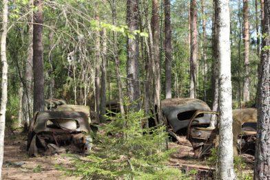 Der Autofriedhof (Bilkyrkogården) im schwedischen Moor Kyrkö Mosse