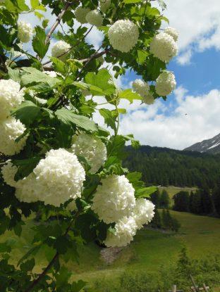 Südtirol erleben: Vom Augen- und Gaumenschmauss im Hotel Jägerhof