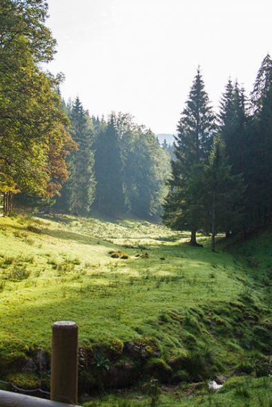 Keine Eile im Wäldle - von zeitlosen Tagen im Schwarzwaldhotel Ailwaldhof