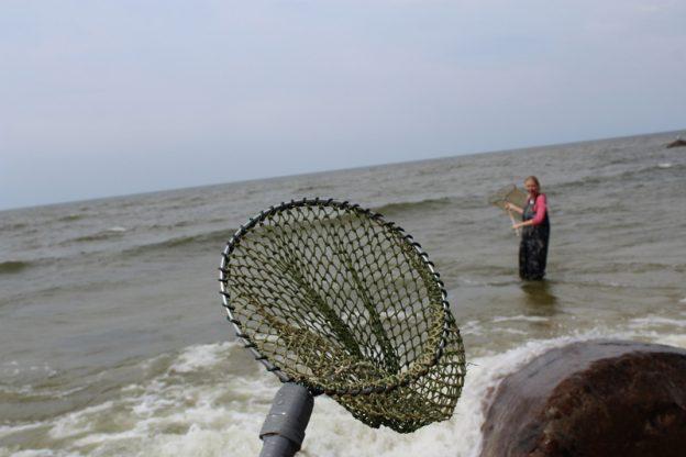Bernstein fischen leicht gemacht - auf der Jagd nach dem Gold der Ostsee