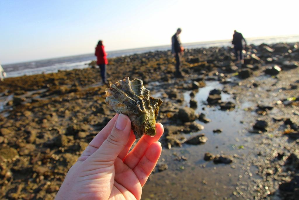 Ist das eine Auster ?
