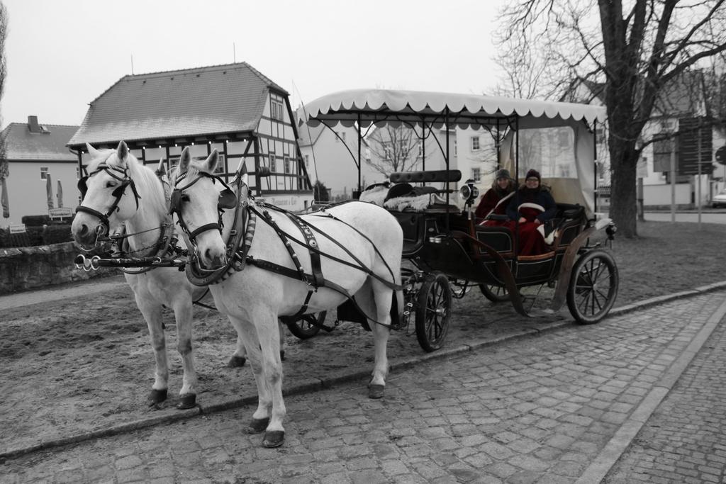Eine Kutschfahrt an der Moritzburg - Auf den Spuren von Aschenbrödel