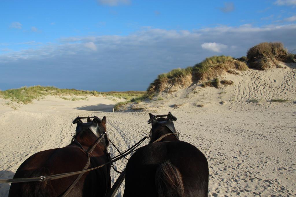 Mit der Kutsche durch den Nationalpark Dünen von Texel