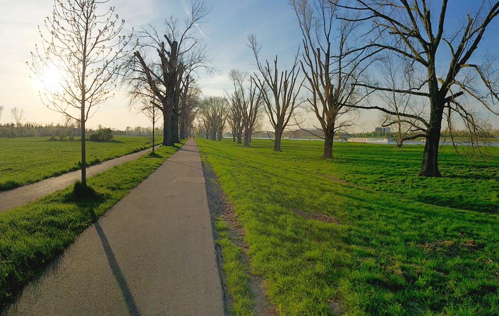 Die schönen Düsseldorfer Rheinwiesen