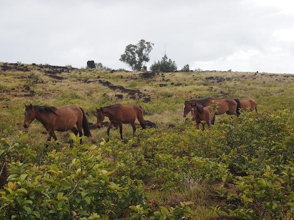 Freilebende Pferde (c) Creativelena.com