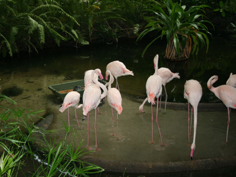 Tropical-Island-Flamingos