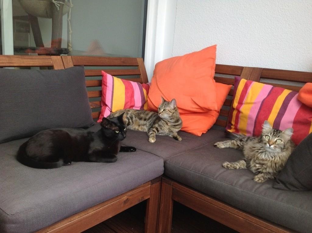 Katzen auf Balkon