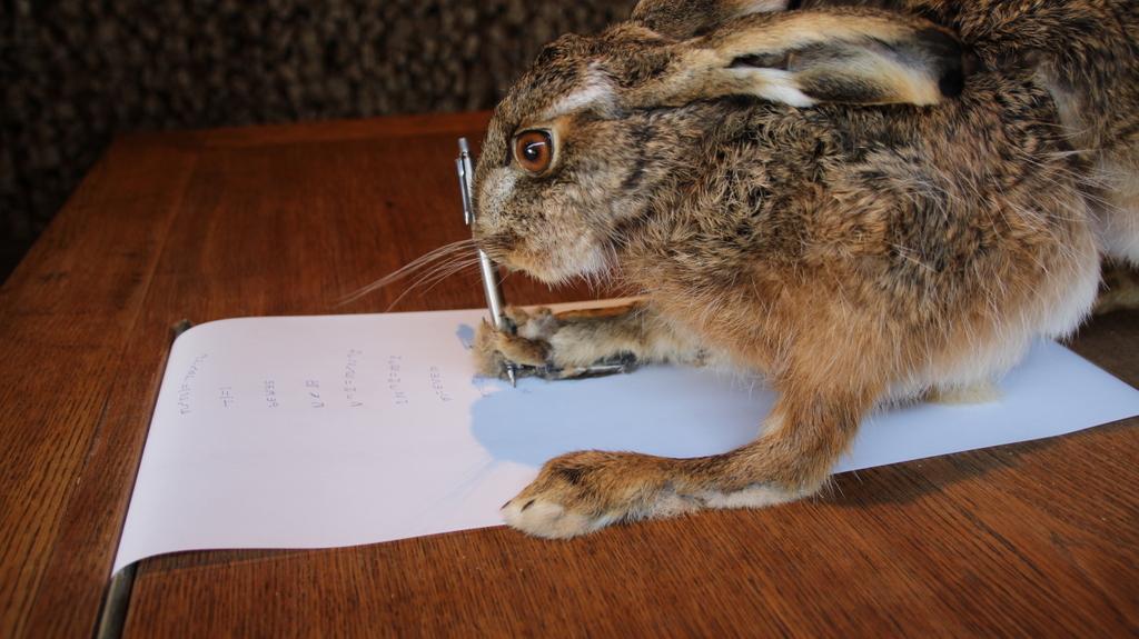 Schreibende Hase