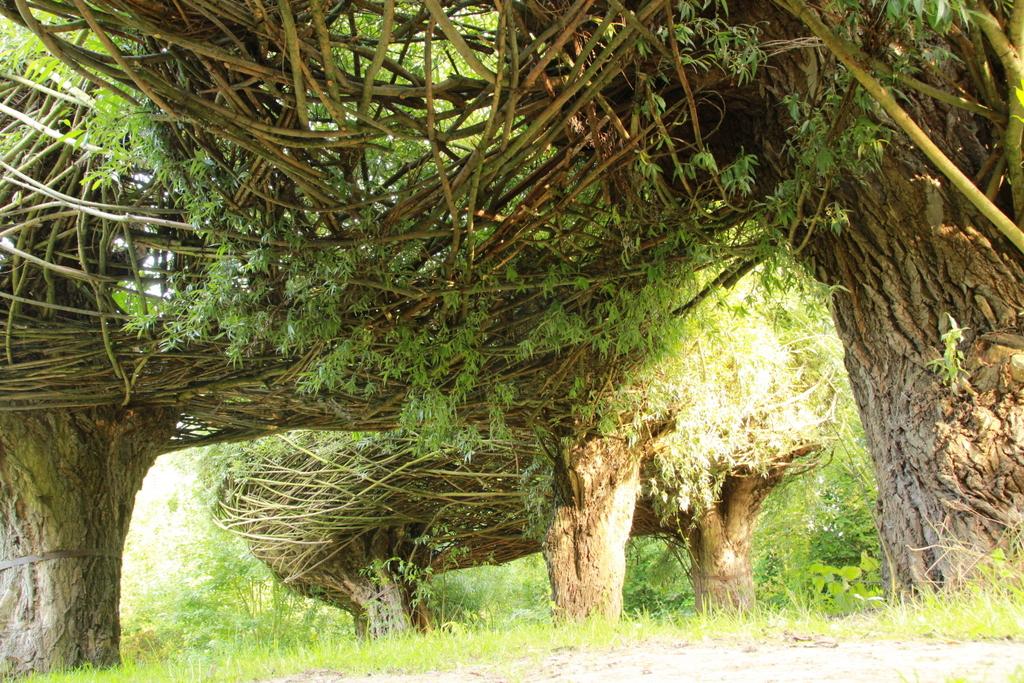 Ein Baumtunnel