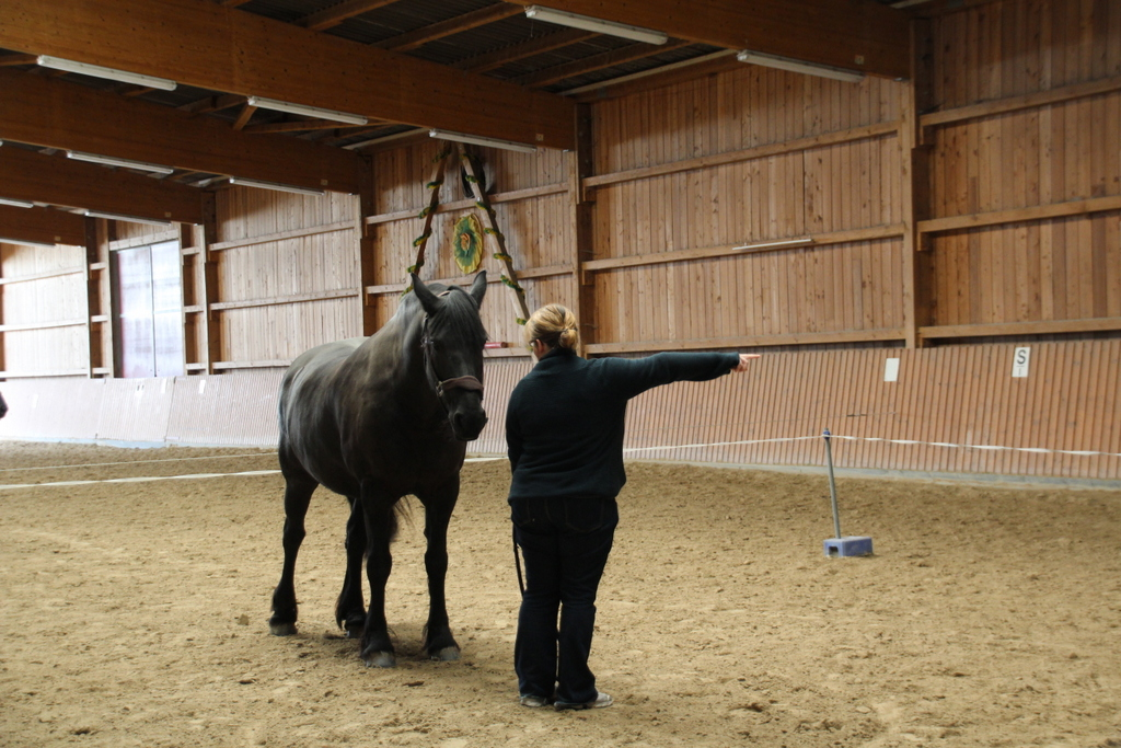 Coaching mit Pferden - Wie ein Seminar mit Tieren meine Verhaltensweise veränderte