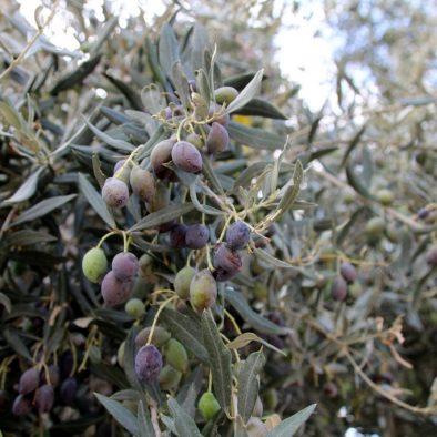 Zypern: Einmal Frühling und zurück