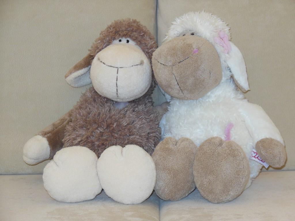 Unsere Schafe - Nepomuk und Babette