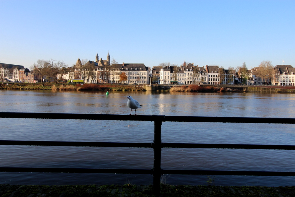 Maastricht Winter am Fluss