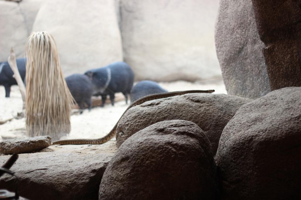 Burgers´ Zoo - Wo sich Fledermaus und Erdmännchen Gute Nacht sagen