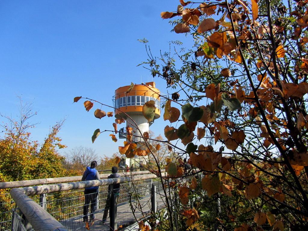 Baumkronenpfad Hainich im Oktober (15)