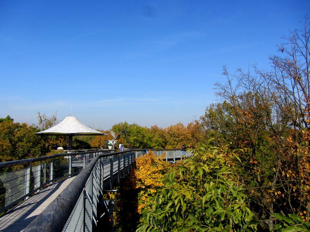 Baumkronenpfad Hainich im Oktober (17)