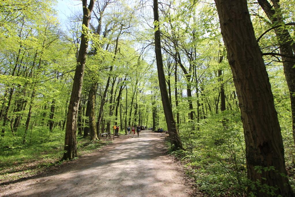Baumkronenpfad im Frühling (2)