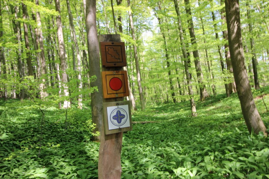 Nationalpark Hainich (11)