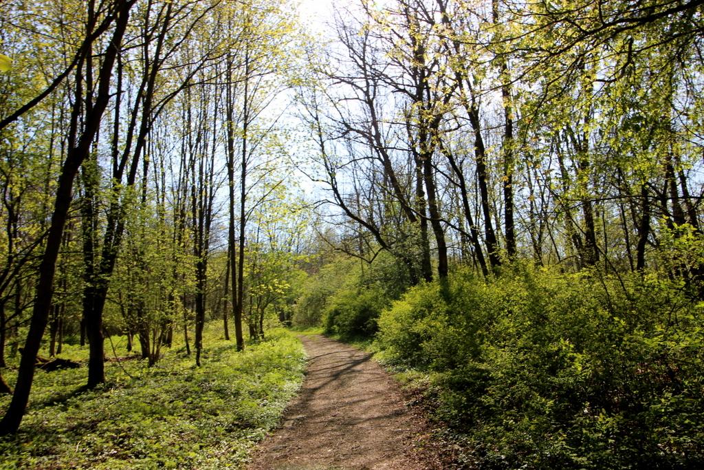 Ein neuer Wald entsteht