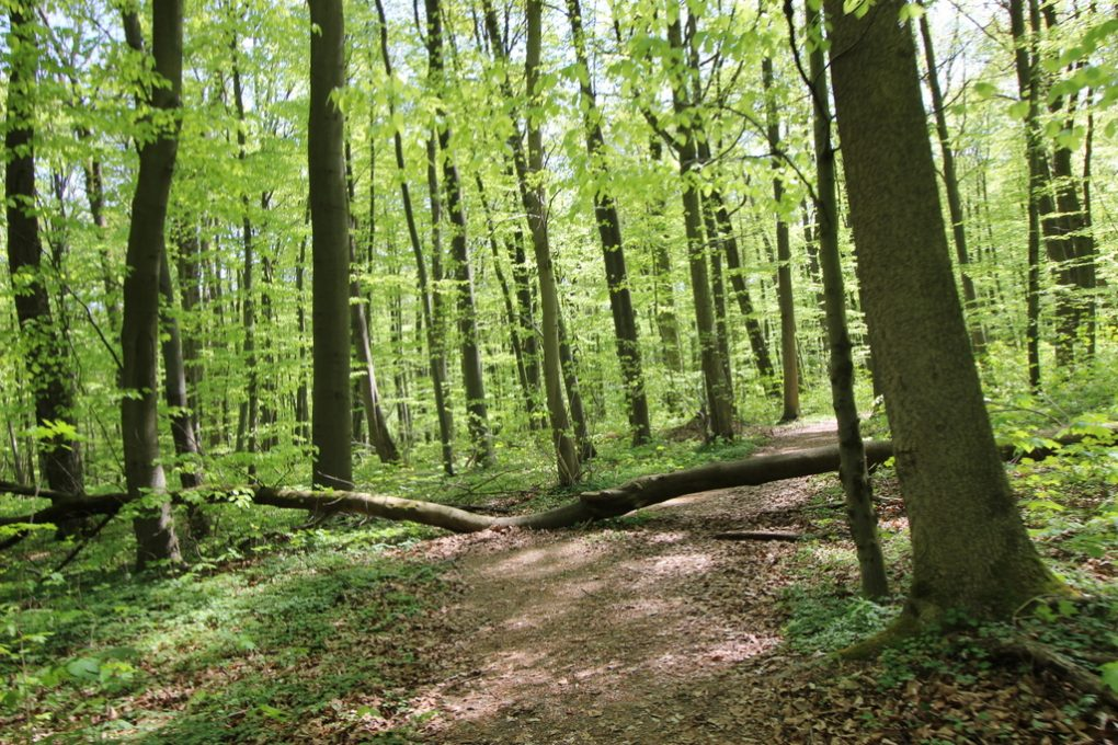 Nationalpark Hainich (6)