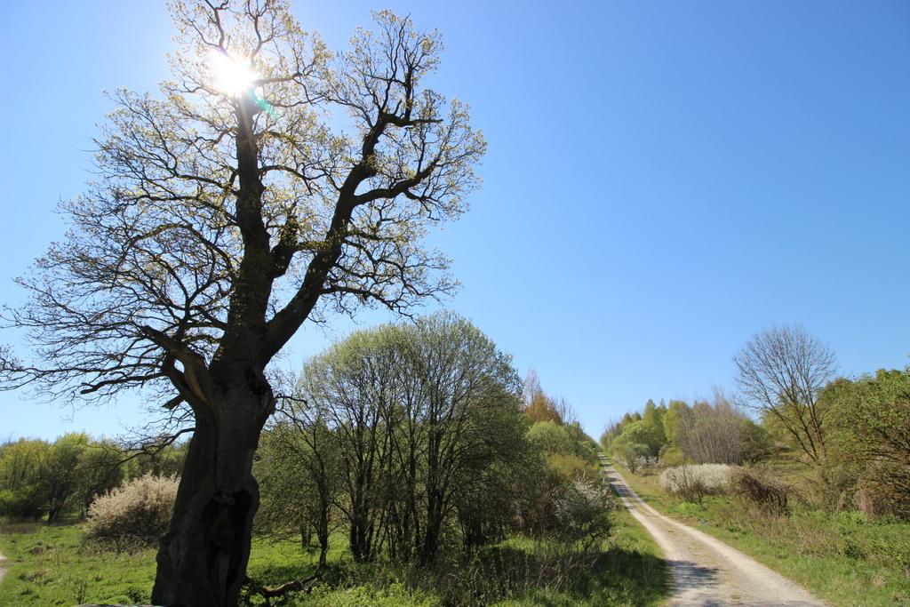 Einer der wenigen alten Bäume hier