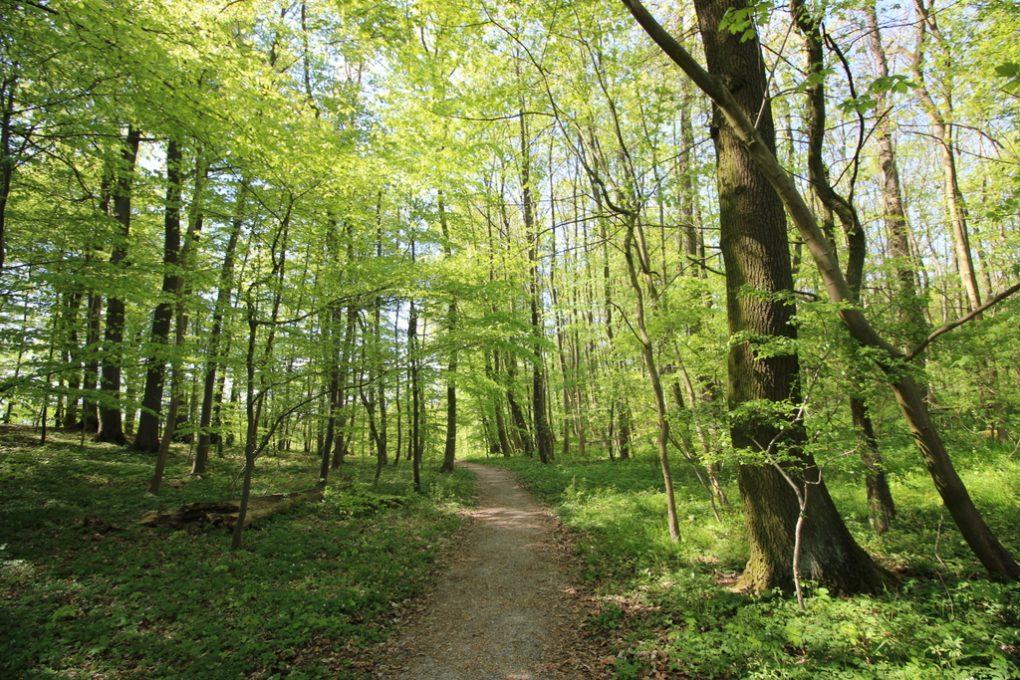 Wildkatzendorf im Hainich (24)