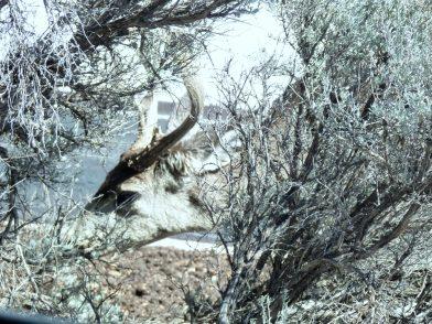 Ein (Kurz)Besuch im Grand Canyon National Park