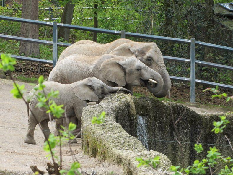 Ein Nachmittag im Wuppertaler Zoo
