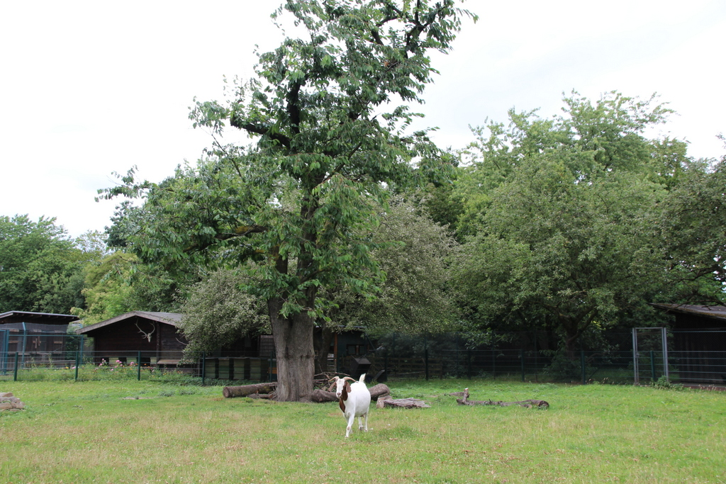 Ein Düsseldorfer Baum