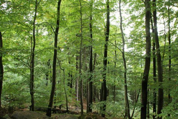 Spaziergang und Wanderungen im Harz