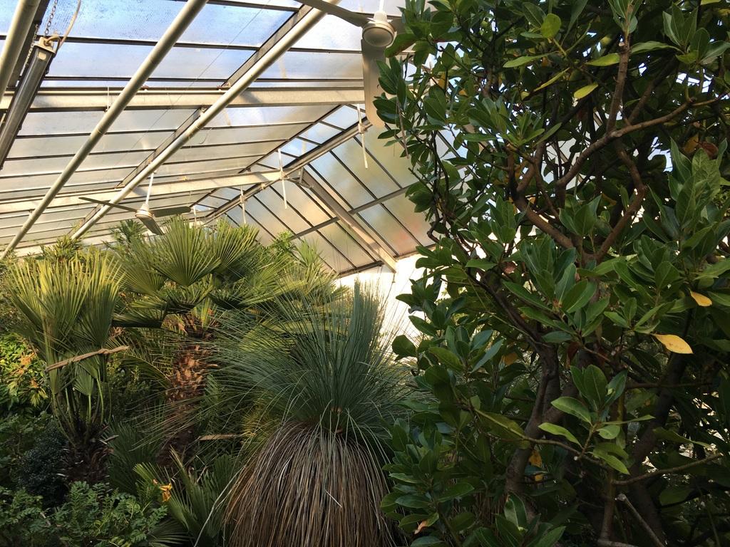 Ein Spaziergang Durchs Paradies Botanische Gärten Mit