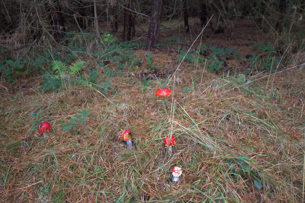 Giftige Pilze - manchmal sind sie nicht von essbare zu unterscheiden