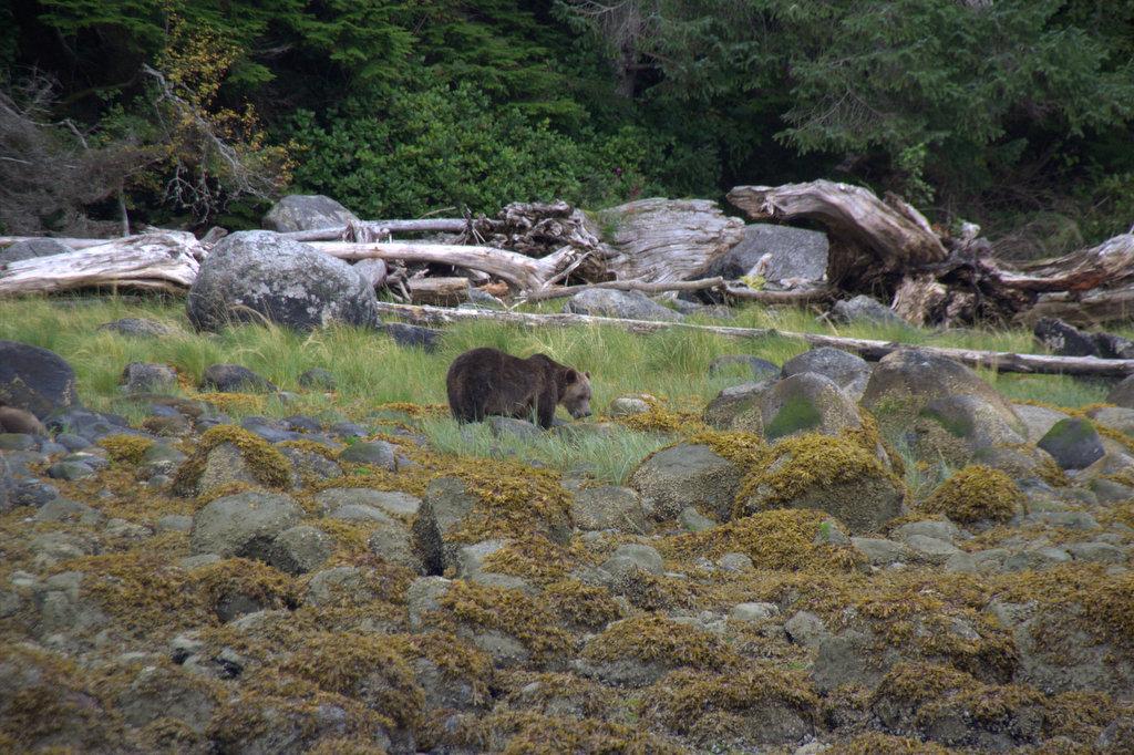 Bären, Wale und Seehunde auf Vancouver Island