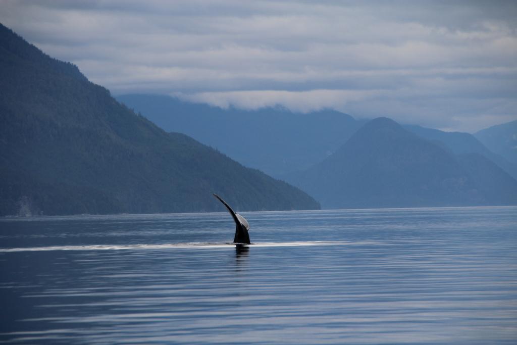 Eine Bootstour auf Vancouver Island - Von Bären, Walen und lustigen Seehunden