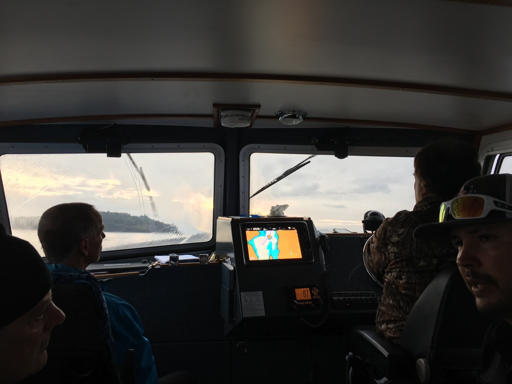 wale-baeren-seehunde-vancouver-island-33