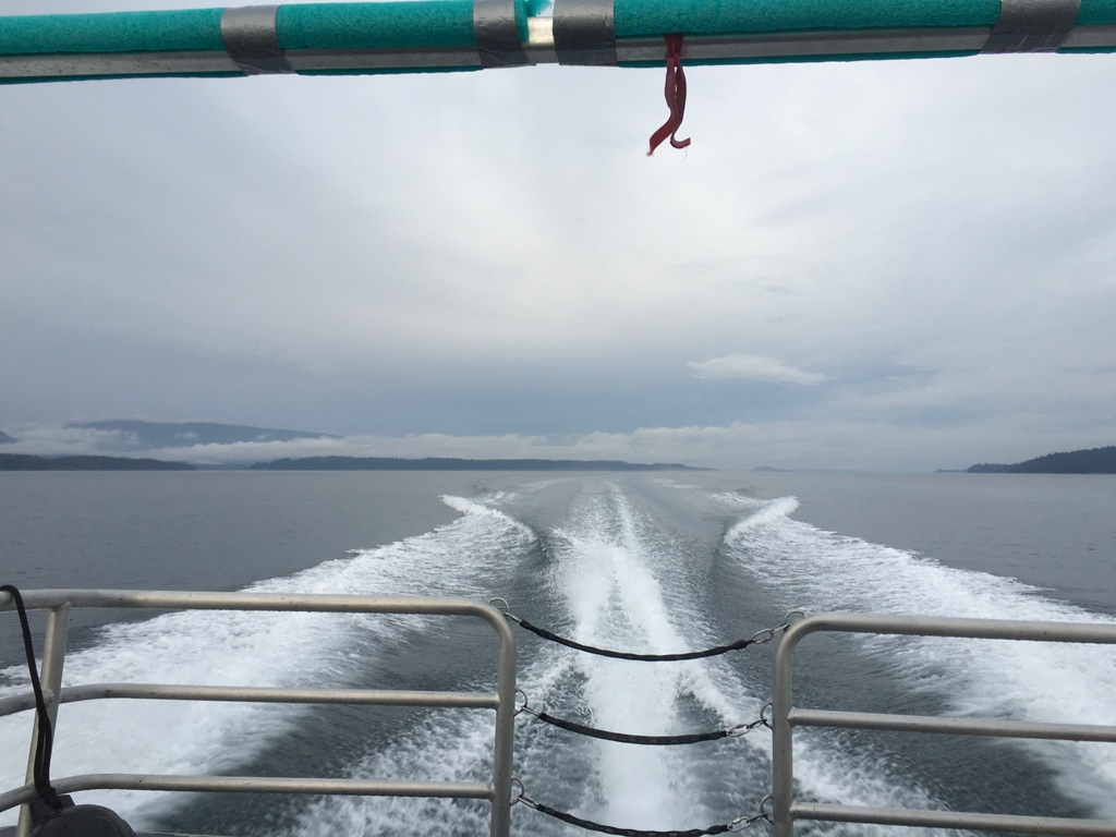 wale-baeren-seehunde-vancouver-island-34