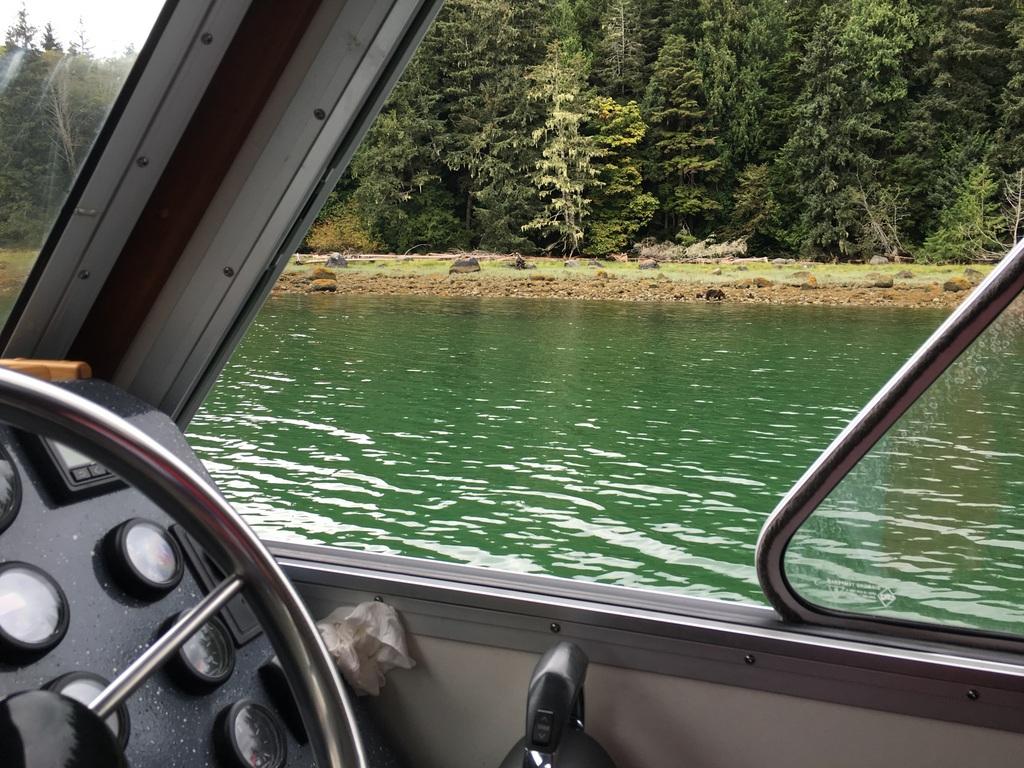 wale-baeren-seehunde-vancouver-island-36