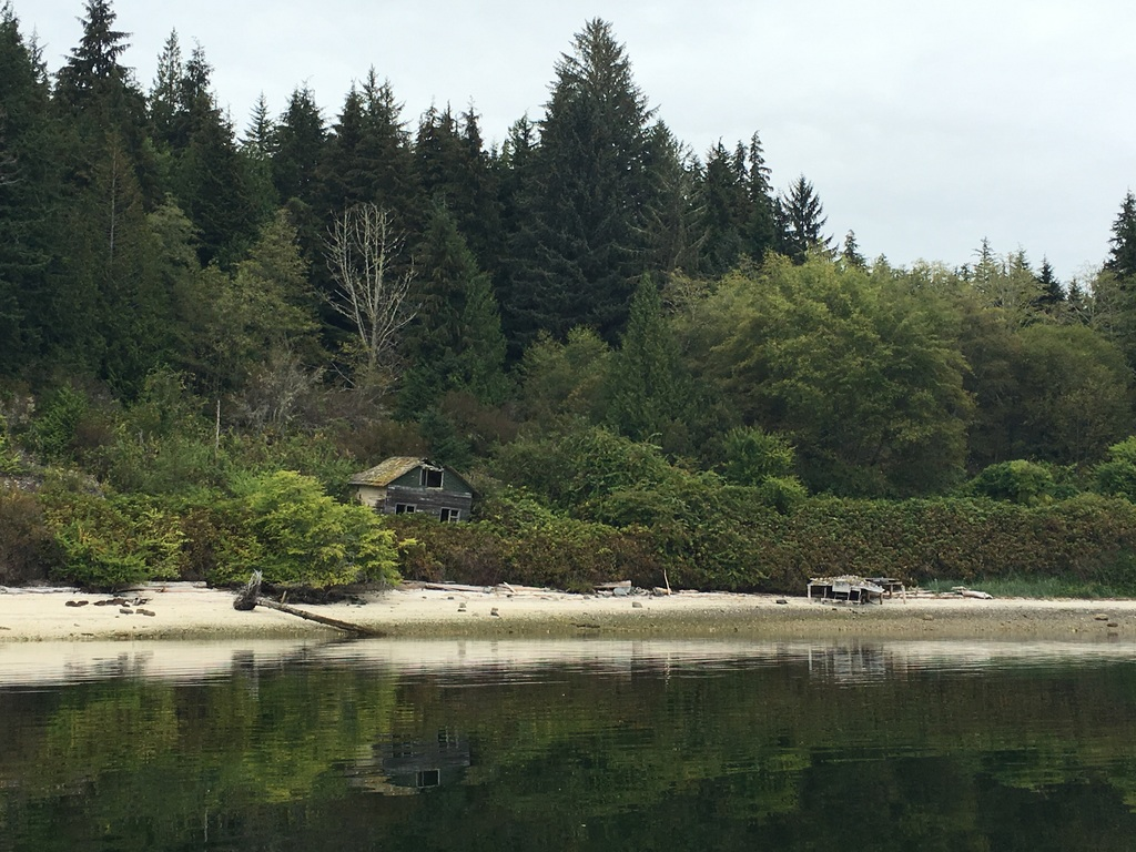 wale-baeren-seehunde-vancouver-island-40