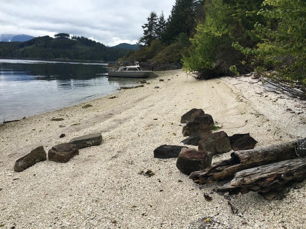 wale-baeren-seehunde-vancouver-island-42
