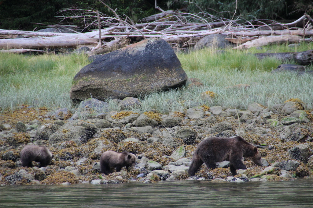 wale-baeren-seehunde-vancouver-island-9