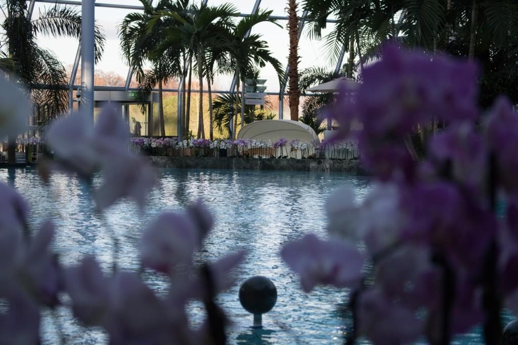 Thermen und Badewelt Euskirchen Palmenparadies